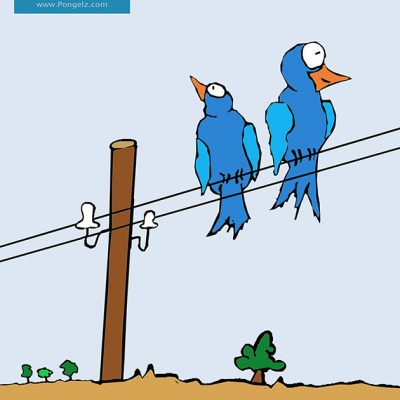 Pongelz Bilder Druck: Birds Komplett 1